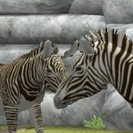 Скриншот My Zoo – Изображение 20