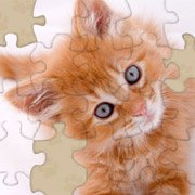 Обложка Adorable Kitten Jigsaw Puzzle