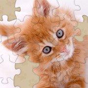 Adorable Kitten Jigsaw Puzzle