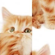 Обложка SlidePuzzle - Baby Kitten