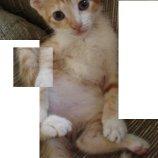 Скриншот Cat Puzzle – Изображение 5