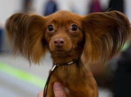 Трогательный флешмоб вTikTok: хозяева снимают реакцию собак наихлюбимые слова