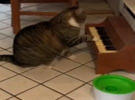 Кот-пианист играет за еду. Это видео дня на YouTube