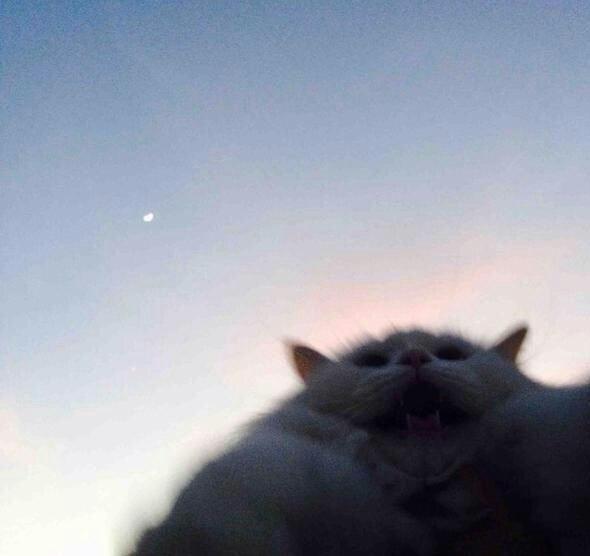 Ненависть, грусть, безысходность и коты. Вспоминаем самые забавные фотографии ко дню кошек!. - Изображение 23