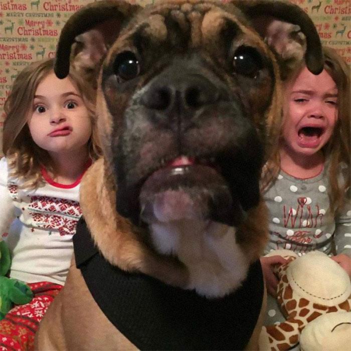 Галерея дурацких рождественских фотографий, которые испортили собаки | Канобу - Изображение 5909