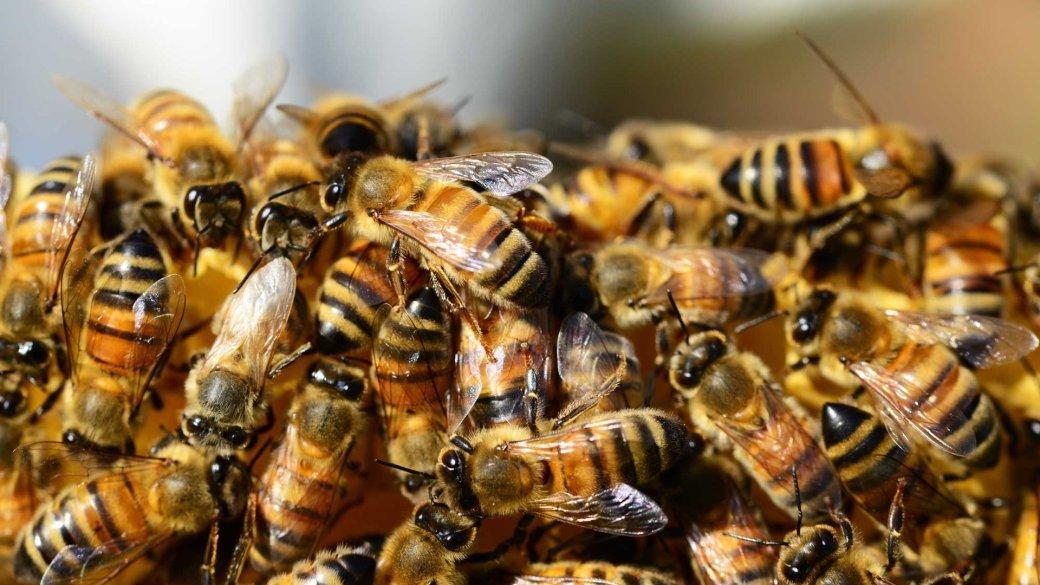 На PornHub появился раздел с порно с пчелами, озвученным известными актерами. Нет, это не шутка | Канобу - Изображение 1